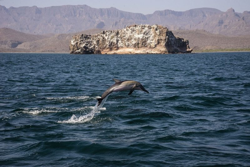 dolphins in loreto mexico