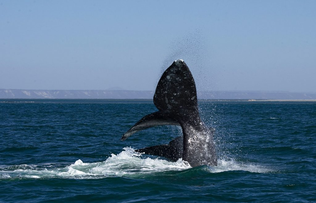 whale watching tour in loreto mexico sea of cortez